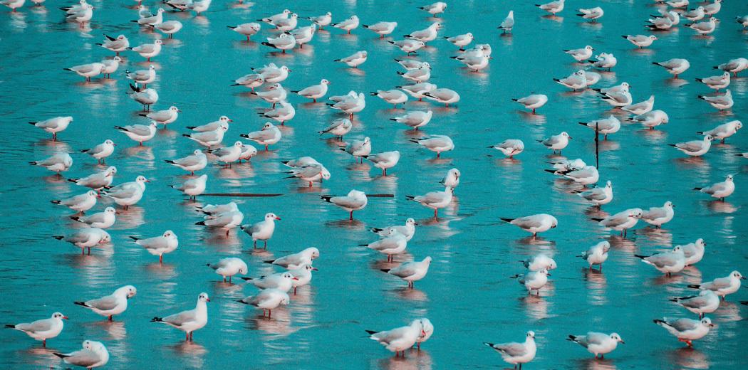 shopper-flock.jpg